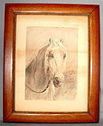 Charcoal Drawing Head of a Horse Stallion by Montgomery