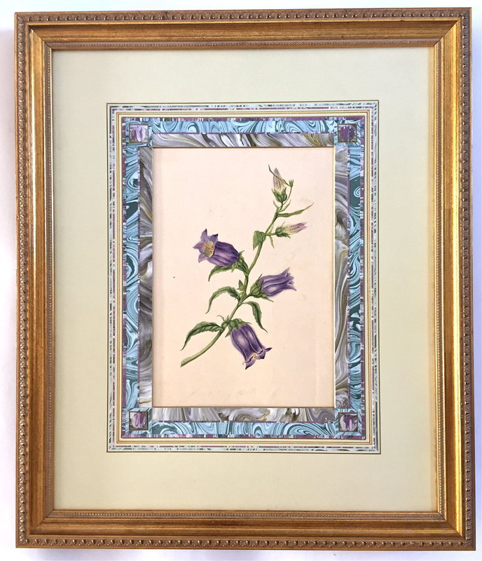 French Watercolor Botanical painting Bluebells c.1847
