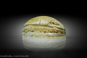 Ancient Egyptian steatite Scarab seal