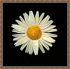 Vintage Carved Ivory Daisy Pin Brooch