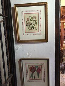 Pr Early 19thc English Botanical Prints Superb Framing Sgnd