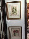 Pr Early 19thc English Botanical Prints Superb Framing Sgnd