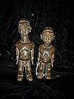 Male and female Ivory  Coast  (pair)