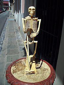 Skeleton Desk Size Individual Bone Construction