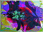 Marci Zelmanoff Photgraphic Collage  --   #1