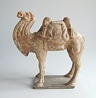 Fine Chinese Early Tang Dynasty Laden Camel + TL Test