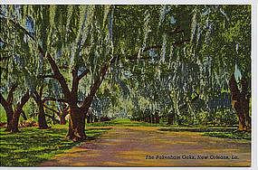 New Orleans LA Linen Postcard - The Pakenham Oaks