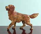 Vienna Bronze Retriever Dog