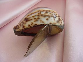Victorian Cowrie Shell Snuff Box