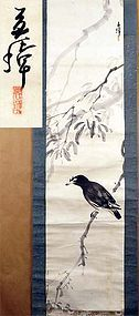 Japanese scroll painting MYNAH by TAKAHASHI GENKI