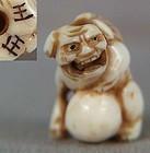 19c ivory OJIME netsuke slide shishi with ball by OSEI