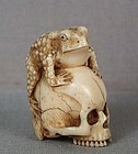 19c netsuke TOAD on SCULL ex Royal Coll