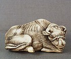 18c netsuke BUFFALO sticking its tongue
