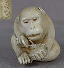 19c netsuke MONKEY with wasp nest by MASAAKI ex Royal