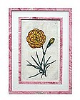 """""""Robert Sweet"""" Botanical Engraving"""