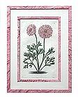 """""""Robert Sweet"""" English Botanical Engraving"""
