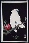 Ohara Koson (Shoson) Woodblock Print - Cockatoo
