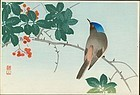 Ito Sozan Japanese Woodblock Print - Blueheaded Bird On Nanten Tree