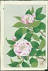 Shodo Kawarazaki Japanese Woodblock Print - Camellias 1953 1st. Ed.