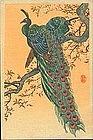 Ohara Shoson (Koson) Woodblock Print - Peacock SOLD
