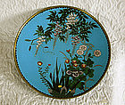 "Japanese Meiji Period Cloisonne 12"" Charger with label"