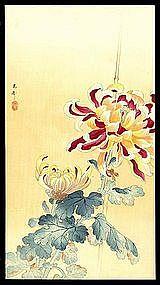 Rare Koson Woodblock - Flowering Chrysanthemum
