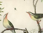 Chinese Bird & Flower Pith Paper Painting #4, 19th C.
