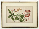 Chinese Pith Paper Painting with Flower & Butterfly.