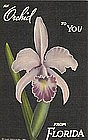 """Orchid From Florida"" Linen Postcard 1940"