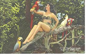 Linen Postcard, Parrot Jungle, Woman In Tree w/ Parrots