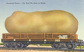 Linen Postcard, Aroostook Potato, Maine, Tichnor