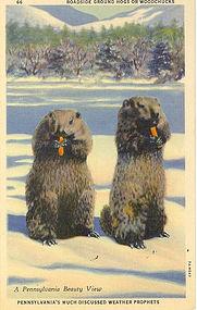 """""""Roadside Ground Hogs"""" Linen Postcard, Curt Teich"""