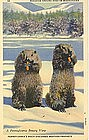 """Roadside Ground Hogs"" Linen Postcard, Curt Teich"