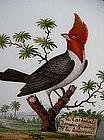 Bird plate by Schoelcher, Paris