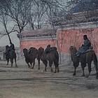 Shanghai China Silk Road Camels  Photograph Photo