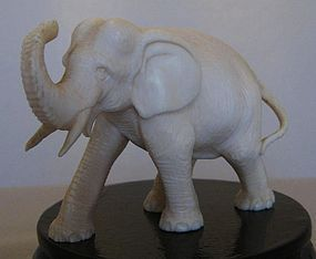 Fine C19th Cent Ivory Okimono of an Elephant-Signed