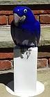 Large B & G Copenhagen Porcelain Blue Parrot