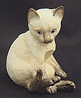 Adorable Worcester Siamese Cat