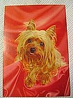Vintage Yorkshire Terrier  Card