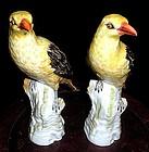 Lovely KPM pair yellow bird Meissen style