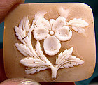 FLORAL 19thC UNSET SHELL CAMEO -  Unusual