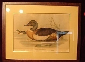 C.1820-1840 TWO LITHOGRAPH GOULD/RICHTER SHORE BIRDS