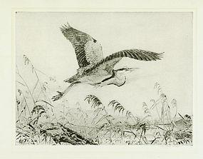 "Winifred Austen, etching, ""Heron Making Off"""