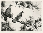 "Aiden Lassell Ripley, Etching, ""Grouse on a Pine Bough"" c. 1930"