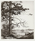 "George Elbert Burr, Etching, ""Old Pine, Estes Park, Colorado"" 1922"