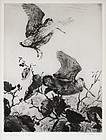 "Aiden Lassell Ripley, etching, ""Woodcock and Alders"" 1936"