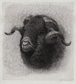 "John Austin Sands Monks, etching, ""The Old Ram"" c. 1880s"