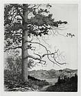 George Elbert Burr, etching, Old Pine, Estes Park, 1922, $1200.00