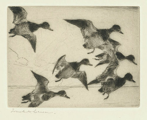 Frank Benson, etching, Bunch of Bluebills, 1931, 495.00