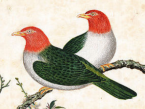 Three Chinese Export Pith Paintings, Birds, 1870.
